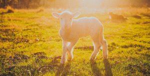 Dia Mundial sem carne – 20 de Março