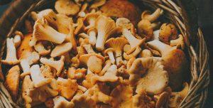 Alimentos vegetais substitutos da carne