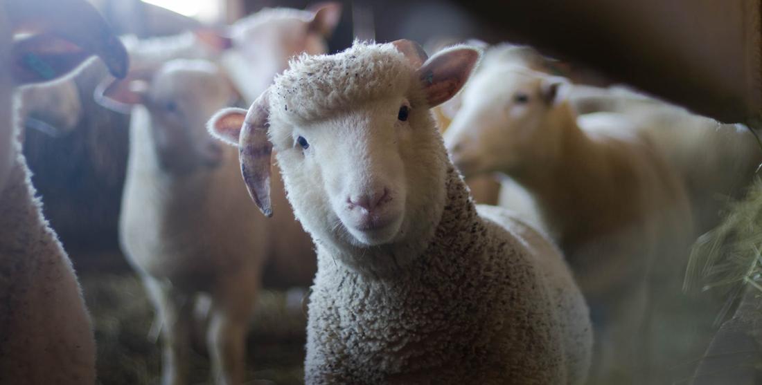 Dia Mundial do Animal | 4 de Outubro